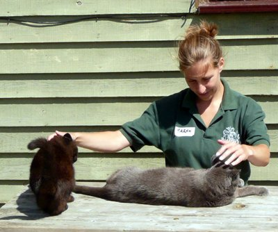 Train as an Animal Healer