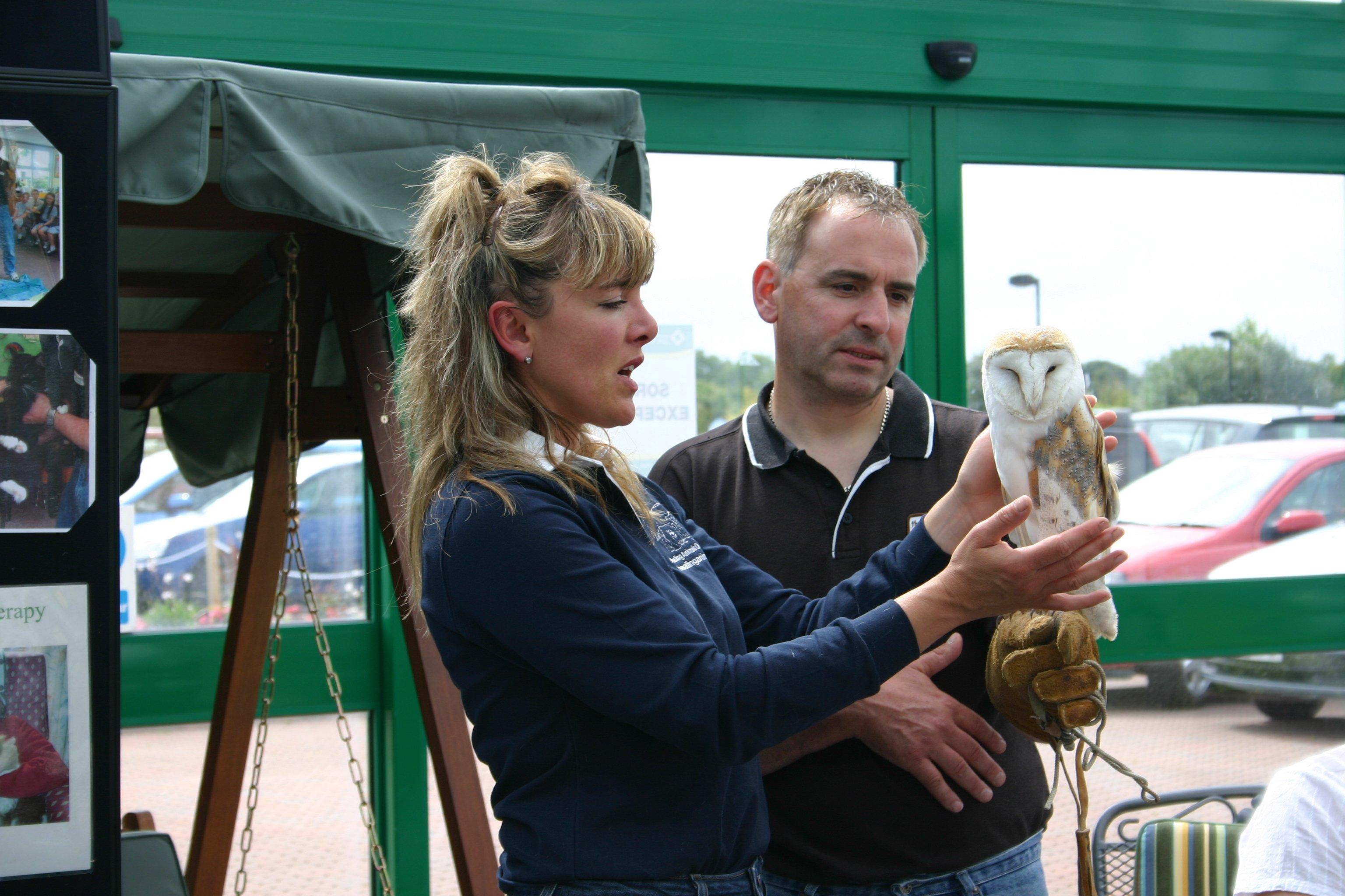 Healing the Barn Owl