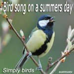 Bird Song On A Summer's Day