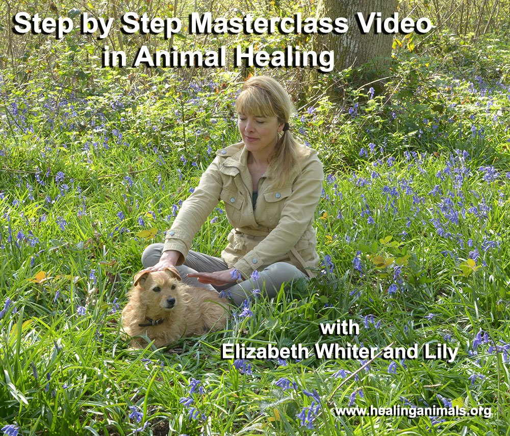 Step by Step Masterclass Video in how to give Energy Healing to your pet