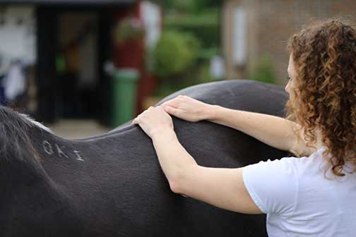 HAO Equine Massage